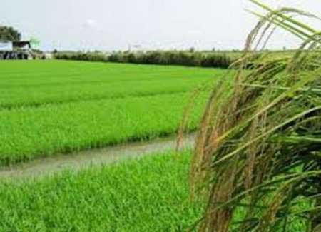 کشاورزی-تنش آبی-مازندران
