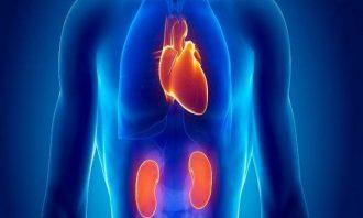 بیماری های قلبی و عروقی-سیگار-فشارخون-ورزش-کلیه